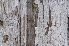 Κλείστε επάνω του φυσικού ξύλινου διακοσμητικού υποβάθρου σύστασης Σκοτεινό λ στοκ εικόνα