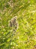 Κλείστε επάνω του glomerata Dactylis χλόης οπωρώνων στοκ φωτογραφίες