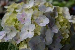 Κλείστε επάνω το άσπρο λουλούδι στο δοχείο Στοκ φωτογραφία με δικαίωμα ελεύθερης χρήσης