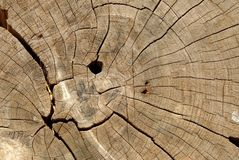 Κλείστε επάνω το δέντρο πυρήνων του κομμένου υποβάθρου κορμών δέντρων, κατάλληλο για την παρουσίαση, το ναό Ιστού, και την παραγω στοκ φωτογραφία με δικαίωμα ελεύθερης χρήσης