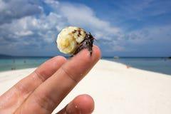 Κλείστε επάνω το ζωντανό καβούρι στην άσπρη παραλία στοκ εικόνες
