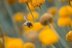 Κλείστε επάνω το κίτρινο λουλούδι που ανθίζει με το υπόβαθρο θαμπάδων στοκ εικόνα