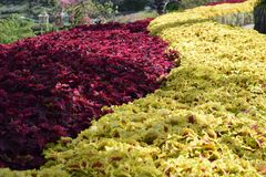 Κλείστε επάνω το λουλούδι ουράνιων τόξων στο πάρκο Στοκ φωτογραφίες με δικαίωμα ελεύθερης χρήσης