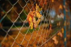 Κλείστε επάνω το μεταλλικό καθαρός-διαμορφωμένο φράκτη από το καλώδιο με το φύλλο φθινοπώρου σε το σε ένα υπόβαθρο της πόλης θαμπ στοκ εικόνες με δικαίωμα ελεύθερης χρήσης