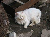 Κλείστε επάνω το πορτρέτο μιας γάτας Στοκ Φωτογραφίες