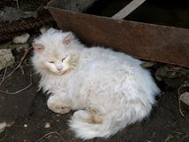 Κλείστε επάνω το πορτρέτο μιας γάτας Στοκ φωτογραφία με δικαίωμα ελεύθερης χρήσης