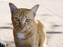 Κλείστε επάνω το πορτρέτο που η πορτοκαλιά γάτα είναι κάθεται σε ένα τσιμεντένιο πάτωμα έξω από το σπίτι στοκ εικόνες