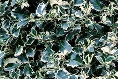 Κλείστε επάνω το πράσινο και κίτρινο υπόβαθρο κήπων φύλλων Όμορφο φυσικό, αφηρημένο κατασκευασμένο σχέδιο εμβλημάτων Στοκ Φωτογραφίες