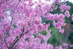 Κλείστε επάνω το ρόδινα λουλούδι και το άνθος Στοκ Εικόνες