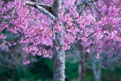Κλείστε επάνω το ρόδινο λουλούδι ή το άνθος Στοκ Φωτογραφίες