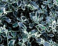 Κλείστε επάνω το σκούρο πράσινο υπόβαθρο κήπων φύλλων Στοκ Φωτογραφία