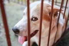 Κλείστε επάνω το σκυλί σε ένα κοίταγμα κλουβιών στοκ εικόνες με δικαίωμα ελεύθερης χρήσης