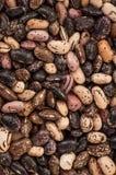 Κλείστε επάνω το υπόβαθρο φασολιών μιγμάτων, σπόροι φασολιών μιγμάτων σπόρος συλλογής τρόφιμα υγιή στοκ εικόνες