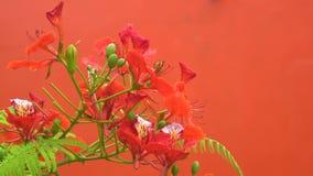 Κλείστε επάνω το φυσικό λουλούδι στο δέντρο στο θερινό ήλιο 4K, βιντεοκλίπ UHD απόθεμα βίντεο