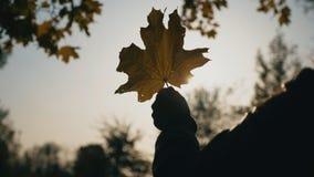 Κλείστε επάνω το χέρι της γυναίκας που κρατούν το κίτρινο φύλλο σφενδάμου και του ήλιου που λάμπει μέσω του Ο ασθενής άνεμος ανακ φιλμ μικρού μήκους