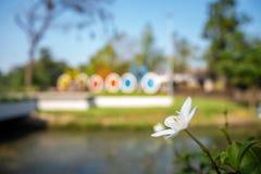 Κλείστε επάνω το χαριτωμένο μικρό ανθίζοντας λουλούδι με το θολωμένο μέτωπο του υποβάθρου πάρκων στοκ φωτογραφίες