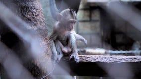 Κλείστε επάνω το χαριτωμένο μικρό πίθηκο στο κλουβί φιλμ μικρού μήκους
