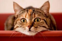 Κλείστε επάνω το όμορφο χαριτωμένο γατάκι με τα πράσινα μάτια διανυσματική απεικόνιση