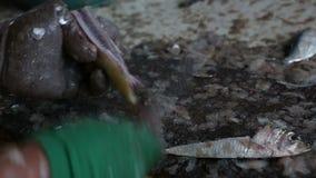 Κλείστε επάνω των ανθρώπων που καθαρίζουν τα ψάρια απόθεμα βίντεο