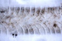Κλείστε επάνω των διαδρομών ροδών στο υγρό χιόνι στοκ φωτογραφίες