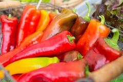 Κλείστε επάνω των ζωηρόχρωμων πιπεριών στην αγορά αγροτών Στοκ εικόνα με δικαίωμα ελεύθερης χρήσης