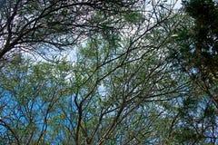 Κλείστε επάνω των κλάδων τα φύλλα που βλέπουν με από κάτω από Στοκ Εικόνες