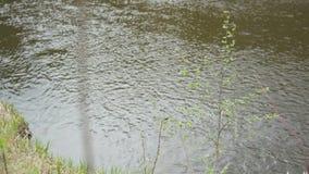 Κλείστε επάνω των κυματισμών στην επιφάνεια του πράσινου ποταμού με το μικρό δέντρο και της πράσινης ακτής χλόης κοντά στο νερό α φιλμ μικρού μήκους