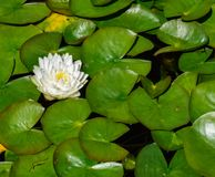 Κλείστε επάνω των λουλουδιών στην άνθιση στοκ εικόνα με δικαίωμα ελεύθερης χρήσης