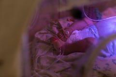 Κλείστε επάνω των νεογέννητων ποδιών μωρών στον επωαστήρα στοκ εικόνες