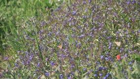 Κλείστε επάνω των πεταλούδων που περιστρέφονται και εσκαρφάλωσαν σε ένα λουλούδι φιλμ μικρού μήκους