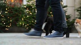 Κλείστε επάνω των ποδιών το ευτυχές ζεύγος Περπατούν με τα χαριτωμένα σκυλιά τους από κοινού φιλμ μικρού μήκους