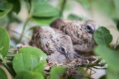 Κλείστε επάνω των πουλιών μωρών στοκ εικόνες με δικαίωμα ελεύθερης χρήσης