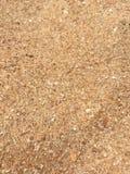 Κλείστε επάνω των σιταριών της άμμου Στοκ Εικόνες
