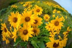 Κλείστε επάνω των wildflowers στη φύση με τα πράσινα φύλλα και το κίτρινο φ Στοκ φωτογραφία με δικαίωμα ελεύθερης χρήσης