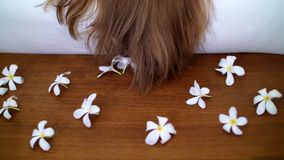 Κλείστε επάνω, όμορφο ντεκόρ στο ξύλινο πάτωμα, σχεδιασμένα λουλούδια, άσπρα magnolias, ρομαντική ατμόσφαιρα, να εξισώσει φιλμ μικρού μήκους
