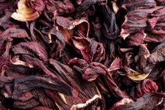 Κλείστε επάνω, Hibiscus sabdariffa ή roselle φρούτα ως υπόβαθρο στοκ εικόνες