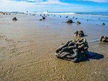 Κλείστε επάνω Lugworm πετά με τον ειδυλλιακό ωκεάνιο και ατελείωτο ορίζοντα στην παραλία στοκ εικόνα