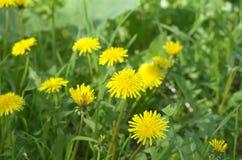 Κλείστε στον κήπο με τα κίτρινα λουλούδια στοκ φωτογραφία