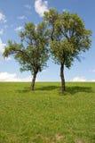 κλείστε τα πυκνά δέντρα Στοκ Φωτογραφίες