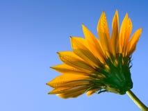 κλείστε το λουλούδι ε& Στοκ Εικόνες