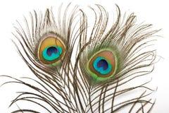 κλείστε το φτερό peacock επάνω Στοκ φωτογραφίες με δικαίωμα ελεύθερης χρήσης