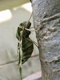 Κλειστή επάνω πεταλούδα νύχτας Στοκ Φωτογραφίες