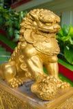 Κλειστή επάνω χρυσή πέτρα λιονταριών Στοκ Φωτογραφίες