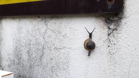Κλειστός επάνω περίπατος σαλιγκαριών στον τοίχο στοκ φωτογραφία με δικαίωμα ελεύθερης χρήσης