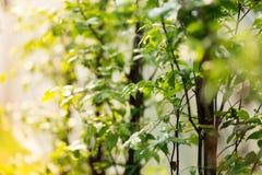 Κλειστός επάνω του πράσινου φύλλου στοκ εικόνα με δικαίωμα ελεύθερης χρήσης