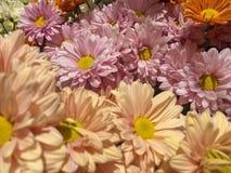 Κλειστός επάνω των ζωηρόχρωμων λουλουδιών στοκ εικόνες