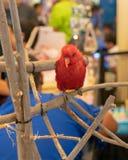 Κλειστό επάνω χαρακτηριστικό κόκκινο πουλί με την ταινία ποδιών στον ξηρό κλάδο Στοκ φωτογραφία με δικαίωμα ελεύθερης χρήσης