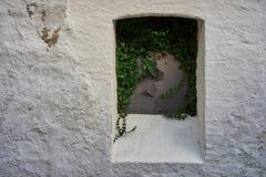 Κλειστό παράθυρο μεταλλικών πιάτων, που εισβάλλεται με τον κισσό, σε έναν άσπρο τοίχο Στοκ φωτογραφία με δικαίωμα ελεύθερης χρήσης