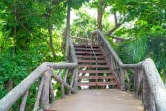Κλιμακοστάσιο μετάλλων με το ξύλο που καταλήγει μια διάβαση πεζών μέσω της ζούγκλας με τα δέντρα στοκ εικόνες