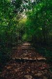 Κλιμακοστάσιο στο δάσος στοκ εικόνες